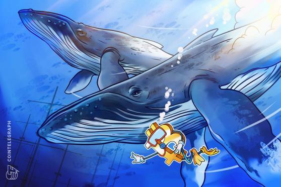 仮想通貨ビットコイン、クジラのウォレットは減少傾向に
